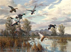 Mallards Near Sutter-Buttes  • Canvas Giclée